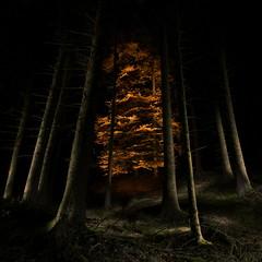 I saw the light (Harpagornis~) Tags: wood longexposure autumn light lightpainting tree nature forest hope gold nationalpark beech naturpark edersee lightwriting kellerwald great123