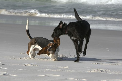 It's the Basset Meets Lurcher moment