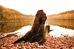 more autumn.  *sigh* (chromatophobe) Tags: autumn lake reflection tree leaves foliage stump burntsienna auburnexplosion copperharvest amberputrefaction naturescoffeehouse sepiasrevenge sunburnedchestnut cinnamongoldrush mahoganysymphony