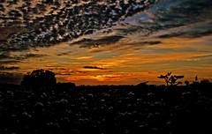 Cottonfield Dawn (T i s d a l e) Tags: autumn fall dawn nikon farm northcarolina cotton 2009 sunup 18mm firstlight highfield newday tisdale f35 12000 nikond40x sunprise cottonfielddawn