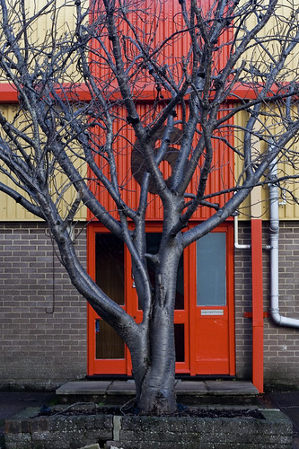 Tree Outside Industrial Unit (1)