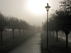 Early birds... (Paul Beentjes) Tags: trees sun mist holland netherlands birds fog bomen nederland vogels zon heemskerk landschapspark