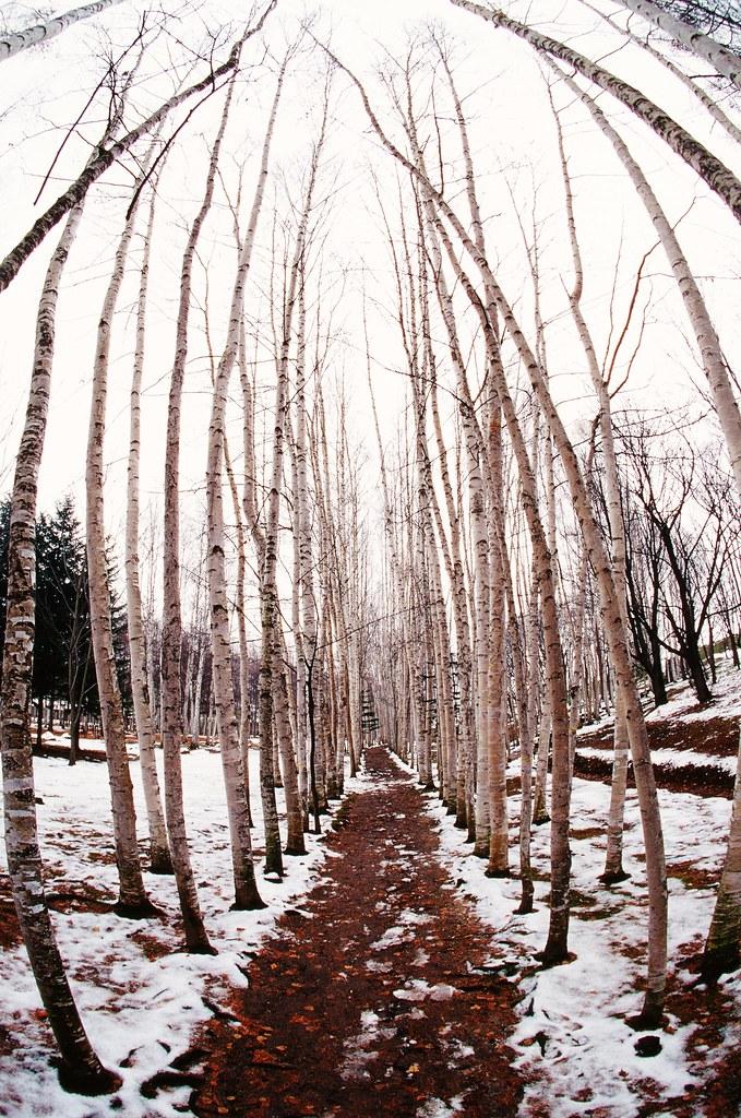 北海道,雪的國度