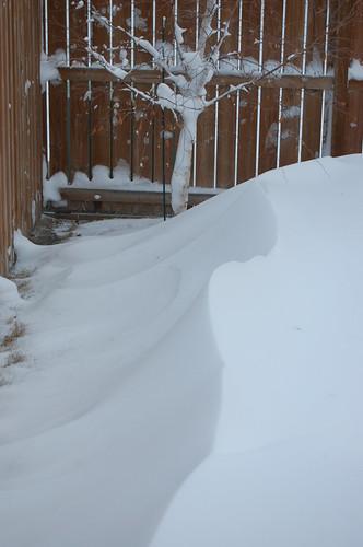 Snow Day December 2009 012
