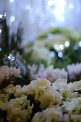 white flowers (micamica) Tags: christmas blue white lights tokyo decoration roppongi holidayseason