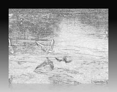hiver 2008 (surlesailesdumonde) Tags: winter seagull hiver reflet picturesque oiseau nantes mouette potofgold erdre brillianteyejewel theperfectphotographer funfanphotos