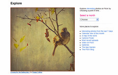 Front Page Explore ~ yippee! (Peggy Collins) Tags: interestingness singing song explore sparrow fp frontpageexplore peggycollins