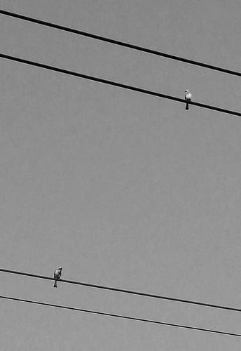 2010/01/15 Day 57 平行線