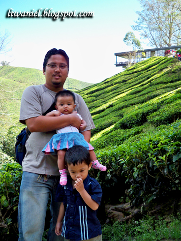 cameron highland jan 2010