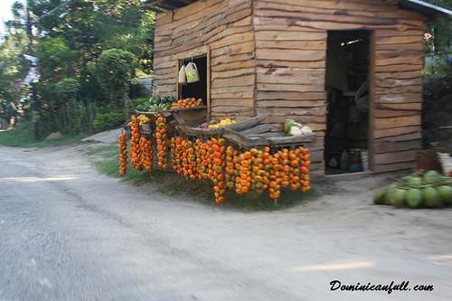 vendiendo mandarinas por puerto plata