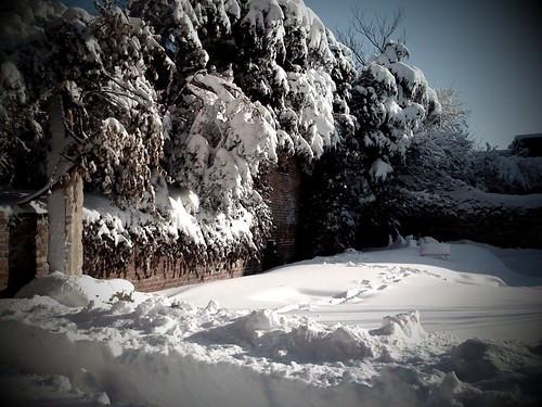 The Winifred Lutz Garden in Two Feet of Snow