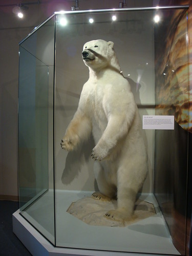 Northern House - Polar Bear!
