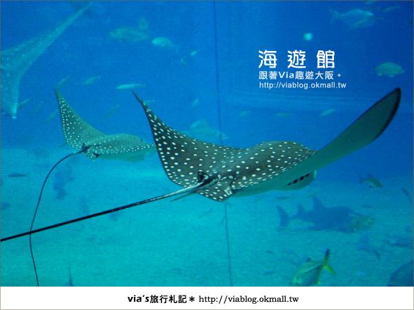 【via關西冬遊記】世界最大極的水族館~大阪海遊館20