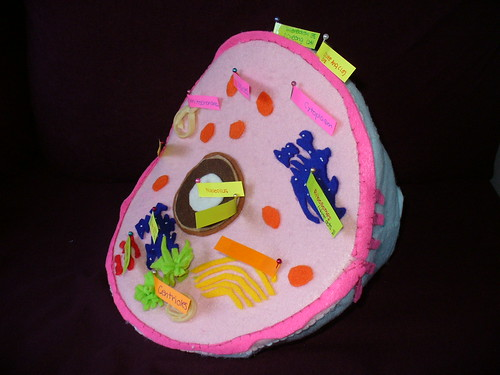 animal cell project pictures. animal cell project photo 01