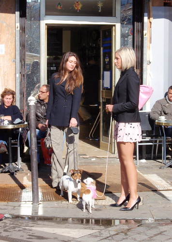 Market and dogs