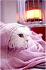 my cat after shower ^.^ (Al HaNa Al Junaidel •• =)) Tags: cat canon shower al cut hana after toto alhana قطه الهناء دلوعتي بسه هناء بسبوسه هنو