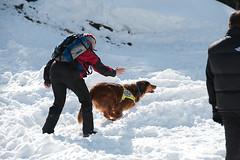 Sending the dog (kameraschwein) Tags: training avalanche lawine rescuedog rettungshund