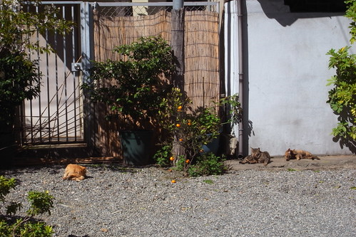 Today's Cat@2010-03-27