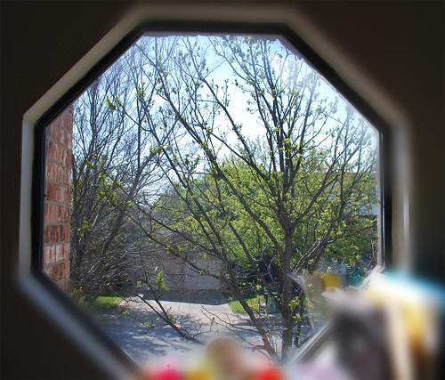 Window---Spring