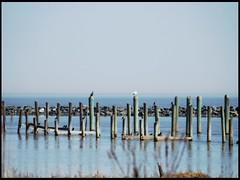 POTW - Photowalk 11.1 - Dupont Nature Center -- Peaceful