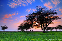 Moving Clouds (A.alFoudry) Tags: pink sunset flower color tree green yellow clouds canon eos spring amazing purple mark towers north lavender reserve full frame electricity 5d kuwait fullframe sabah ef kuwaiti q8 abdulla abdullah  mark2 1635mm  || f28l  kuw  q80 q8city xnuzha alfoudry   canonef1635mmf28l abdullahalfoudry foudryphotocom  mark|| 5d|| canoneos5d|| mk|| canoneos5dmark||