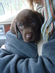 Jasper in car coming home