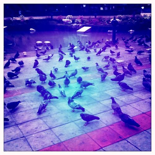 Pigeonsssss