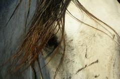 Arabic horse (Mamdouh almalki) Tags: