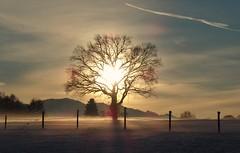 Adrian Vesa Photography (adr.vesa) Tags: tree sunset fog mist nabel winter snow