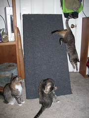 cats scratchingpost cattree clawing