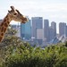 "A girafe in the city • <a style=""font-size:0.8em;"" href=""http://www.flickr.com/photos/57963491@N00/4018318465/"" target=""_blank"">View on Flickr</a>"