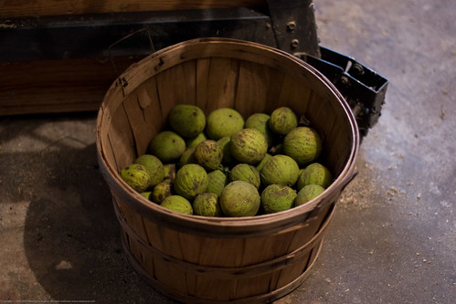 Edible Forest Gardens: black walnut