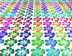 Petals (2009-10-25) 01