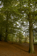 Autumn Love (Liz Faulkner) Tags: autumn trees red green fall leaves cheshire fourseasons nationaltrust 4seasons alderleyedge vosplusbellesphotos diffanglephoto lizfaulkner copyrightelizabethfaulknerdiffanglephotolrps