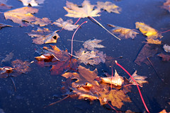 puddle leaves 3