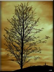(0180) Nackte Schnheit - Naked beauty (EnDe53) Tags: autumn tree fall silhouette canon herbst powershot soe baum blueribbonwinner bej fineartphotos flickrdiamond elitephotography thisphotorocks theperfectphotographer goldstaraward rubyphotographer ennodernov