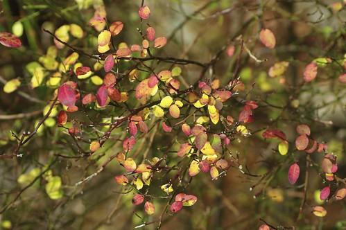 Twinkling Autumn