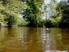 Swimmer's View (Maris Otter) Tags: summer august 2009 montague