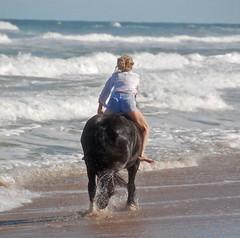 (The Pelton Vanners Gypsy Vanner Horses) Tags: horses horse riding cob gypsy pelton foal foals irishcob gypsyvanner gypsycob gypsyvannerhorse thepeltonvanners