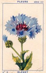 milliat fleurs007
