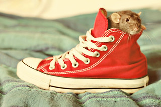 There's a rat in my shoe!