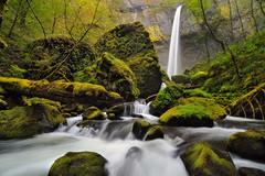 Toward a Green Future (Michael Bollino) Tags: green nature oregon river landscape waterfall spring nikon columbia falls future gorge columbiarivergorge d300 elowah michaelbollino