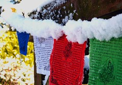 Prayer Flags in my Garden (annicariad) Tags: snow sunshine wales colours cymru prayerflags annicariad