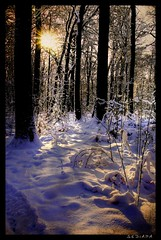 winter sun (sediama (break)) Tags: schnee winter sun snow germany pentax hannover explore textures soe eilenriede nostairs mywinners k20d sediama ninianlif heutemalkeinetreppen pentaxda1710mmf3al ©bysediamaallrightsreserved