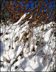 Allgaeu 2010 Januar Schnee 7