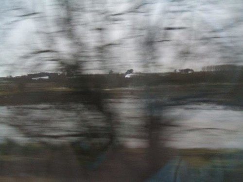 Blurry trees and flooded field