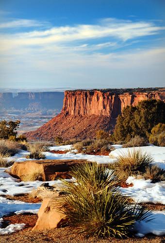 canyonlands yucca blue sky