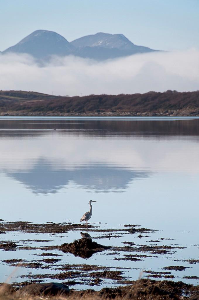 Heron at Loch Sween