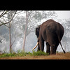 komban (sash/ slash) Tags: travel green tourism animals forest wildlife kerala sash tamilnadu southindia bandipur mudumalai sajesh