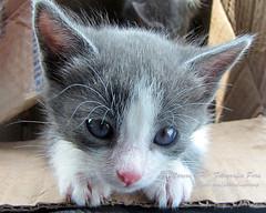 Lola con botas? (Marcos GP) Tags: trip viaje pet peru cat lola gato gata arequipa mascota peruvian marcosgp